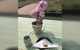お花見喫茶